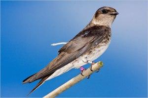 13birds-650a