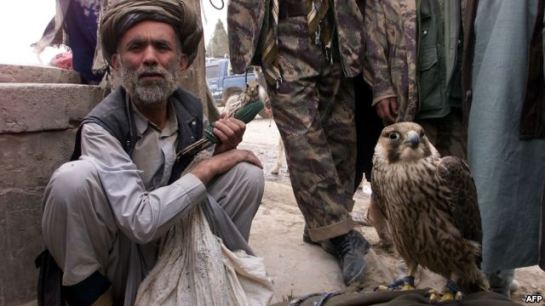 An Afghan man with a falcon at a refugee camp near Radja Bahoudine.