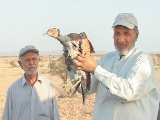 Birds donated to the Sindh wildlife protection department being released in National Park Jamshoro on Sunday. PHOTO: EXPRESS