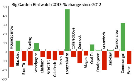 Big Garden Birdwatch 2013