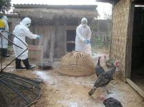 more than 400 million poultry died or were slaughtered after contracting avian influenza from 2003 to 2011