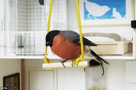 Home-sweet-home: A bird enjoys a swing in this pad which is actually a bird house