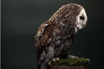 An owl was shot at Leadhills estate in South Lanarkshire