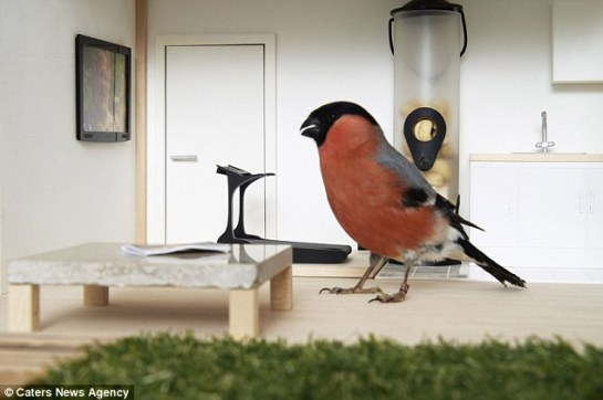 Creature comforts: The home is fitted with a predator alarm so a bird can enjoy its surroundings without the threat of danger