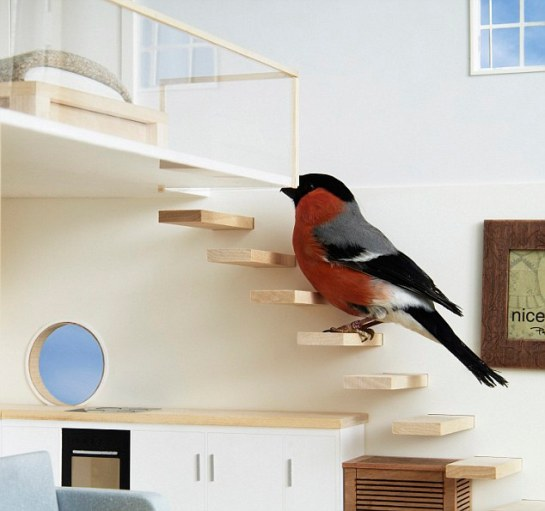 Cosy: Members of the public can download blueprints to make their own bird house which has a staircase