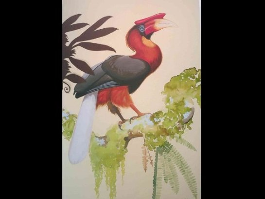 A RUFOUS hornbill as painted by David Tomb, one of the images on exhibit at the Ayala Museum in Makati City.