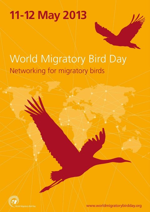 World Migratory Birds Day 2013