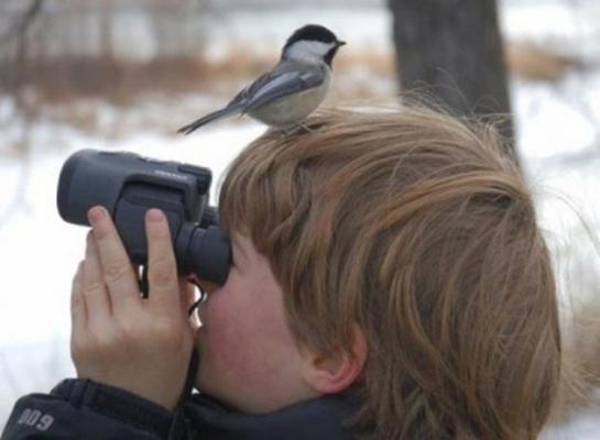 Birdwatching preview