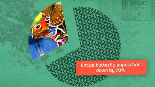 pleasantland_butterflies_w_LRG