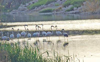 Al Ansab wetland (Muscat Daily)