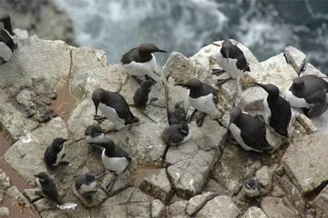 080917-seabird-chicks-02