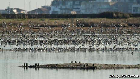 "The RSPB has described the actions of some visitors as ""selfish"""