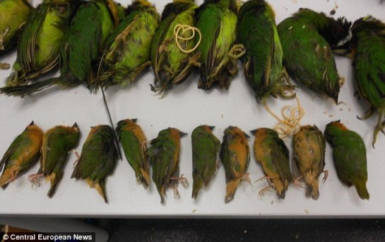 The birds had to be killed after one was discovered to have the deadly H5N1 bird flu virus