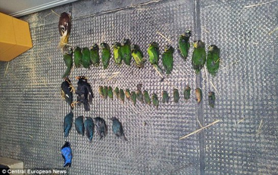 The 60 birds - wild parrots, birds of paradise and other exotic species - had been trafficked from Bali to Qatar