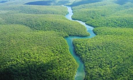 News-new-bird-species-found-in-brazils-amazonian-jungle-istock_000001771644medium