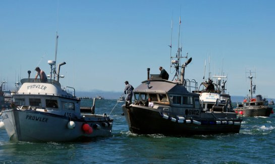 Gill net fishing vessels in Alaska. Eighty-one types of birds have been reported killed by the nets.