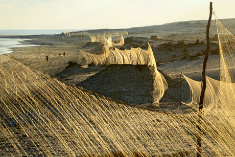 A line of nets erected on coastal dunes to catch migrating Common Quail (Coturnix coturnix) along the Egyptian Mediterranean seashore, autumn 2012. Photo by Holger Schulz/NABU