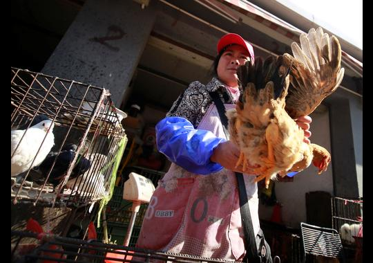 A vendor holds a chicken at a chicken whole sale market in Shanghai, China.(Photo: AP Photo)