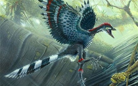 Scientists have found that the dinosaurs' brains were similar to that of Archaeopteryx, pictured, which is thought to be the first bird Photo: PA