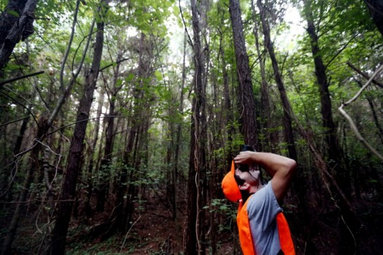 : Andrew Arnold uses binoculars to look for berries in the tree canopy near the Great Dismal Swamp Trail in Chesapeake. (Steve Earley | The Virginian-Pilot)