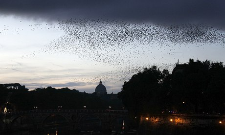 Starlings fill the sky in Rome, with the dome of Saint Peter's silhouetted. Photograph: Stefano Rellandini/Reuters