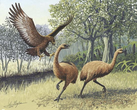 Giant Haast's eagle attacking New Zealand moa. Artwork: John Megahan. Copyright: PLoS Biology. Via Wikipedia.