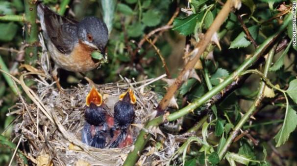 Birds under threat