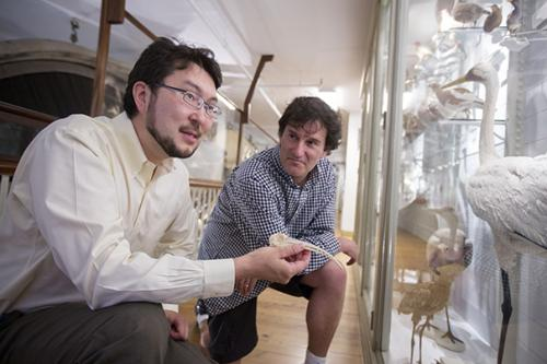 Arkhat Abzhanov (left), associate professor of organismic and evolutionary biology, and Michael Brenner, Glover Professor of Applied Mathematics and Applied Physics, co-lead authors of a new study that looks at how developmental mechanisms both allow for great variability and create powerful constraints on the shape of the beaks of song birds. Credit: Kris Snibbe/Harvard Staff Photographer
