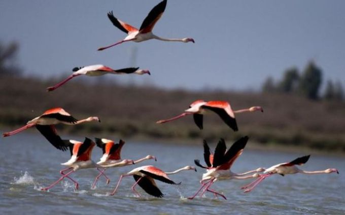 How migratory birds help spread plant species.