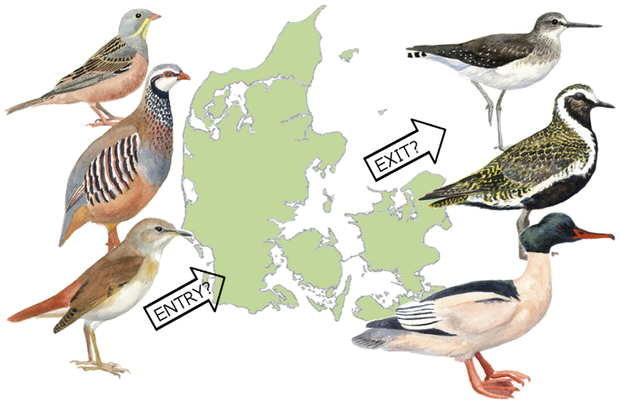 As the climate changes, birds of a feather no longer necessarily flock together. (PLOS ONE)