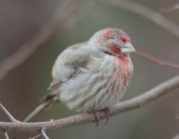 "Many Bird Species Exposed to ""Eye Disease,"" New StudyFinds"