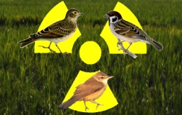Scientists detect genetic abnormalities in Fukushima birds,insects
