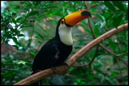 Birds and Bats Act as RainforestGardeners