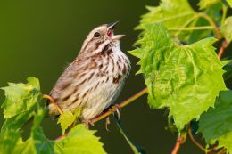 Wild Birds' Songs, Feather Colors Changed by Mercury Contamination
