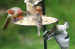 Who will come to your bird feeder in2075?