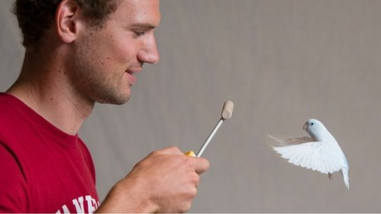 The scientists trained birds to fly towards a perch inside the device